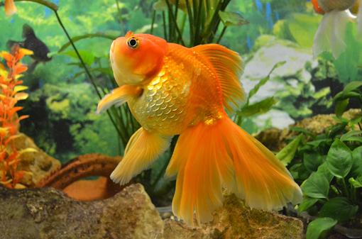 photo-aquarium
